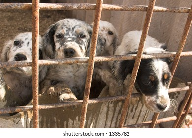 dogs in captivity
