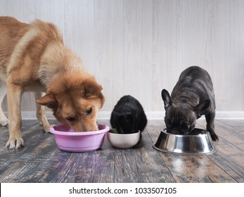 Dogs and cat eat animal feed from bowls together
