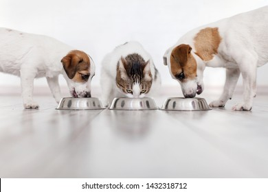 Dogs and cat eating food