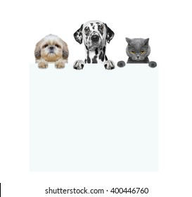 dogs and cat holding a frame in their paws -- isolated on white background