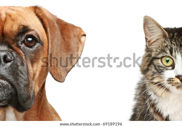 Hunde und Katzen. Hälfte des Maulkorns, Nahaufnahme-Portrait auf weißem Hintergrund