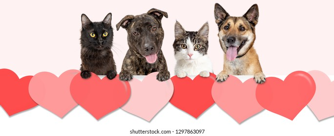 Dogs and cats hanging over row of Valentine's Day hearts. Website banner or social media cover.