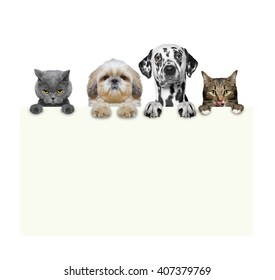 dogs and cats holding a frame in their paws -- isolated on white background