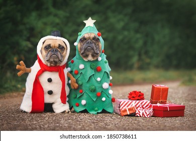 Dogs in Christmas costumes. Two French Bulldogs dresses up as funny Christmas tree and snowman with red gift boxes