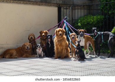 Dogs of different breeds on a leash are waiting for the Walker on the city street. Argentina, Buenos Aires