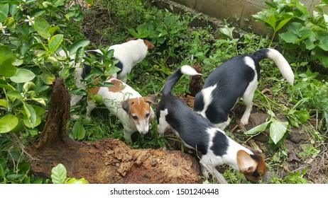 dogs dig the ground in garden