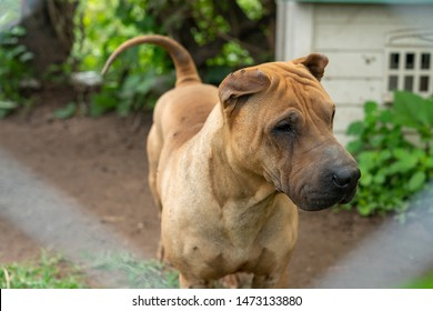 Dogs at dog shelter, abandoned stray dogs looking for a home