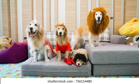 Dogs dressing in Wizard of Oz costumes for Halloween. They are dressing as Tin man, Scarecrow, Cowardly lion and black puppy.
