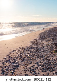 Dogs enjoy peaceful mornings on Cape Cod beaches too