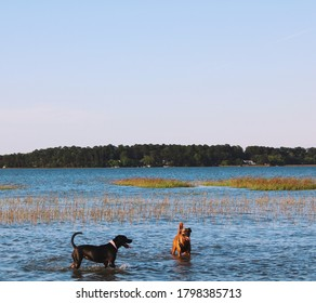 Dogs enjoying the lowcountry life