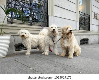 Dogs family. Spain. Madrid.