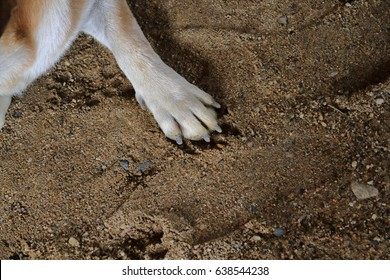 Dog's feet are on the sand