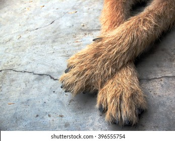 dogs foot on floor,brown dogs foot on ground,dogs foot feeling happy,dogs cross one's legs
