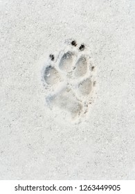 Dog's footprint on the snow shot from above