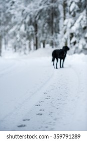 dog's footprints in snow