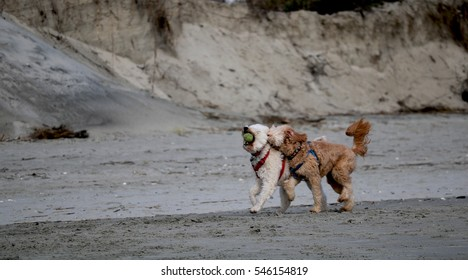 Dogs frolicking on the beach