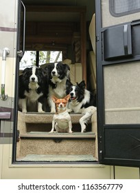 dogs getting ready to travel