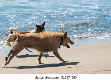 Dogs having fun with waves at Kuta Beach, Bali
