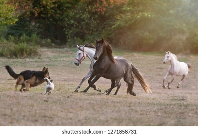 Dogs and horses running together in a meadow in Galicia (Spain)
