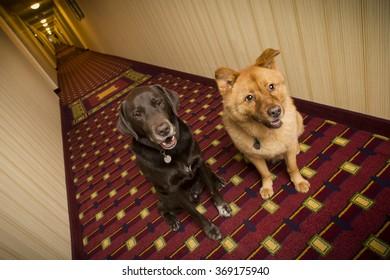 Dogs in hotel corridor