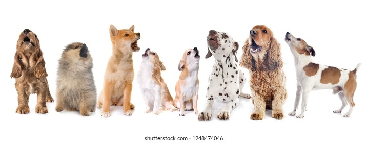 dogs howling in front of white background
