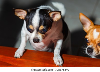 Dogs look at food.