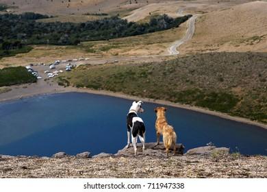 Dogs looking at Batea Mahuida volcano crater, on  Villa Pehuenia, Patagonia, Argentina,