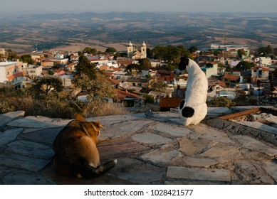 Dogs looking at the city in Brazil