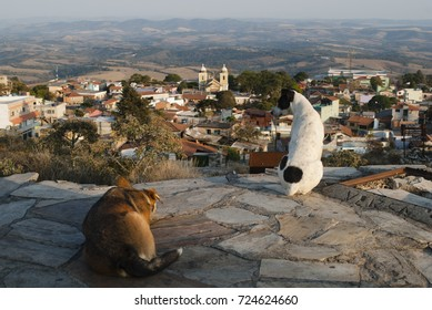 Dogs looking the city in Brazil