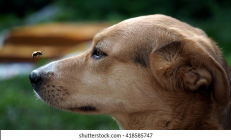 Insect Bites On Dogs