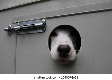 Dog's nose from the cage