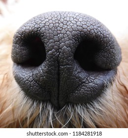 Dog's nose and nostrils