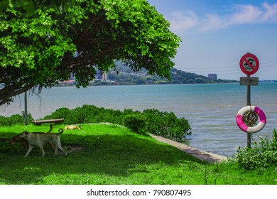 Dogs on the Coast, Tamsui, Taipei