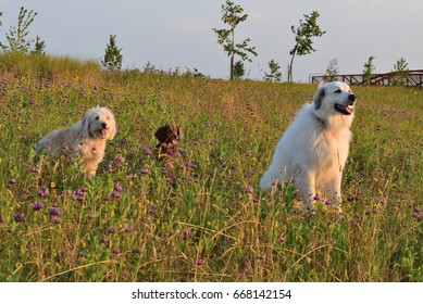 Dogs on a field