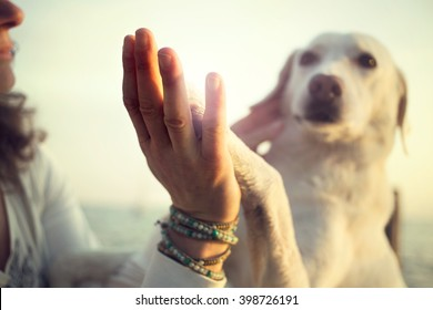 Dog's paw and man's hand gesture of friendship