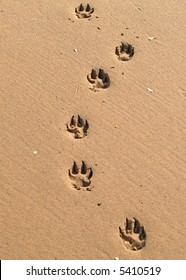 095c78385 Paw Prints in the Sand Images
