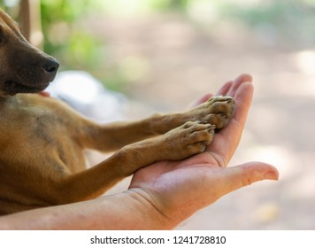 A dogs paws in a human hand.