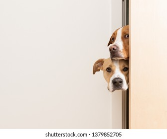 Dogs Peeking into Room