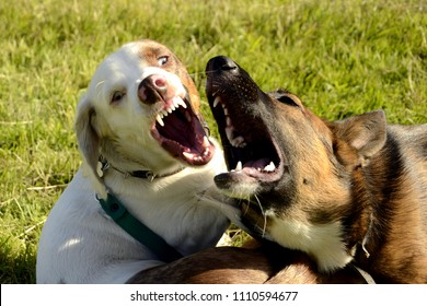 Dogs play with each other. Merry fuss puppies. Aggressive dog. Training of dogs.