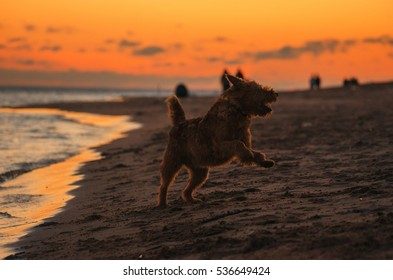 dogs play on the beach, a decline, beach
