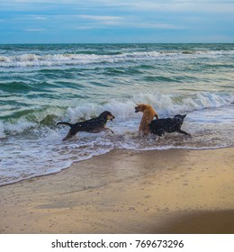 Dogs play with water in the sea