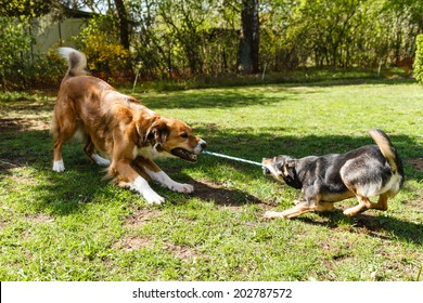 Dogs Playing Game Zerr