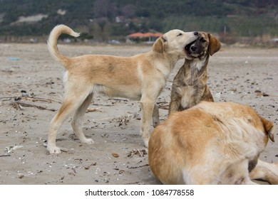 Dogs playing on sand