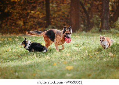 Dogs playing on the walk