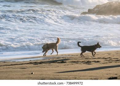 Dogs portrait playing on the beach, near seashore