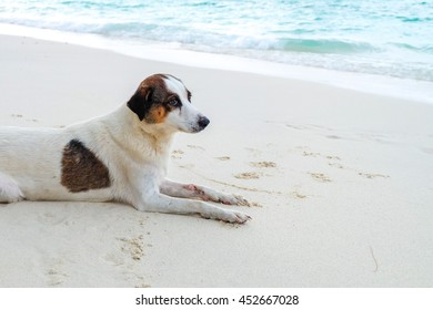 Dogs resting on a beach in Phuket
