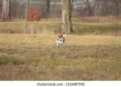 Dogs running in the green grass