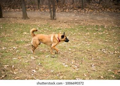 Dogs running outside