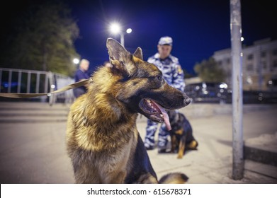 dogs of the Russian police, the fight against terrorist attacks and mass protests Russia. terrorist bombings, night security, bomb search