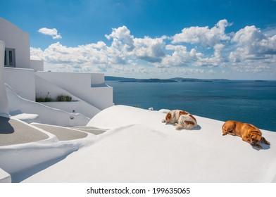 Dogs in Santorini